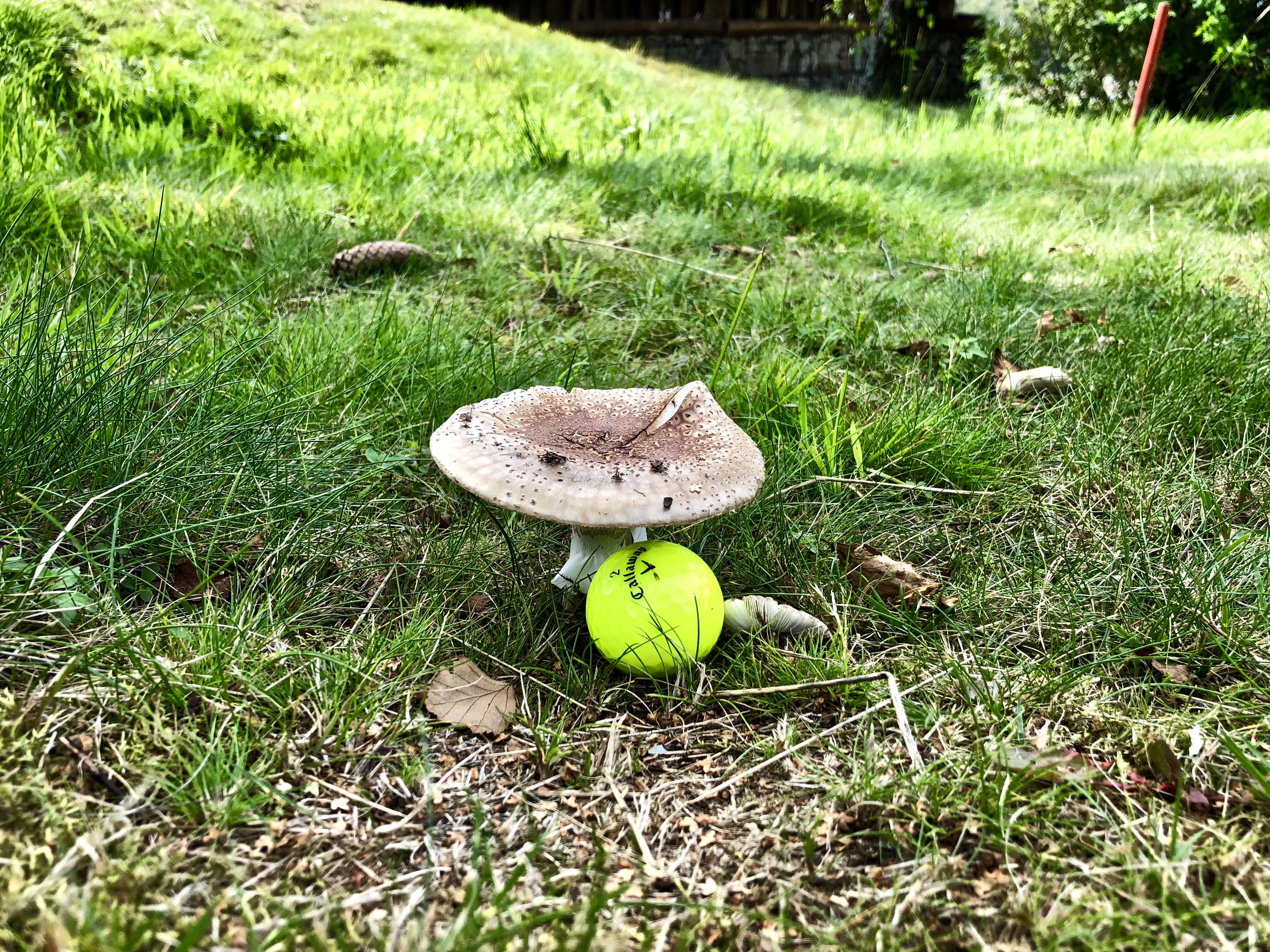 Příroda a golfová pravidla{lang}
